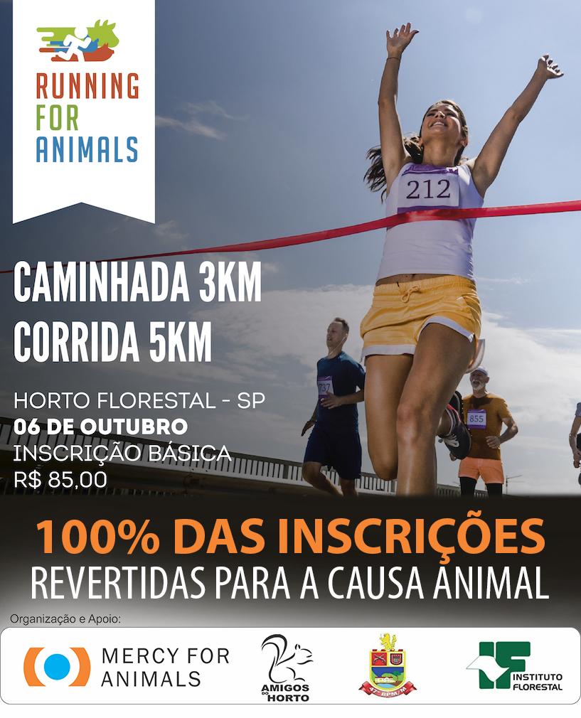 Corrida para os animais 2