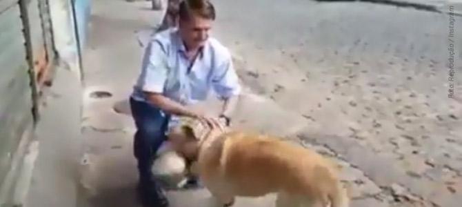 Bolsonaro promete já para agosto Secretaria dos Animais – provavelmente só para cães e gatos 1