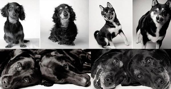 Trabalho fotográfico acompanha cachorros desde filhotes até a velhice.